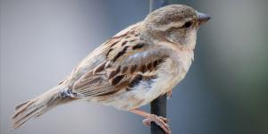 Venkovní ptactvo