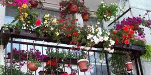 Na balkónové rostliny