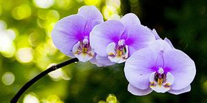 Na orchideje