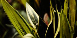 Ostatní pokojové rostliny