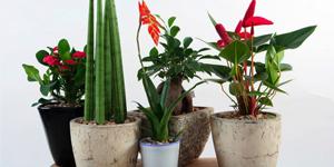 Na pokojové rostliny