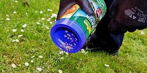 Proti plevelům v trávníku