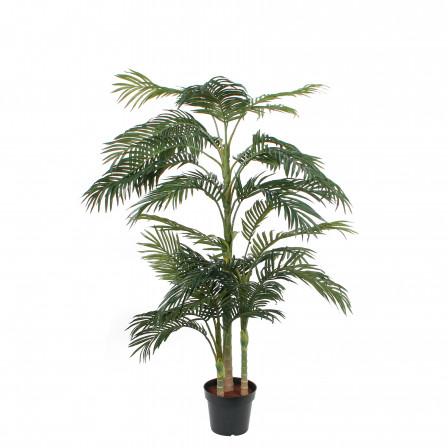 UK Palma Areca v květináči