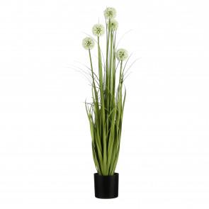 UK Česnek v květináči s bílým květem