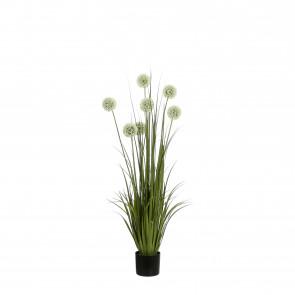 UK Česnek v květináči s bílým květem 122x15cm