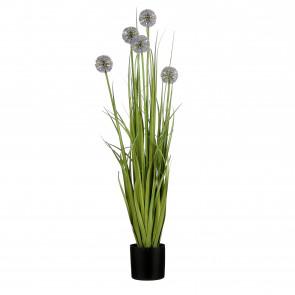 UK Česnek v květináči s fialovým květem