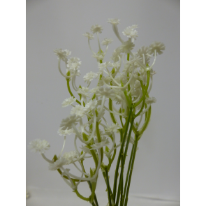 UK Gypsophylla