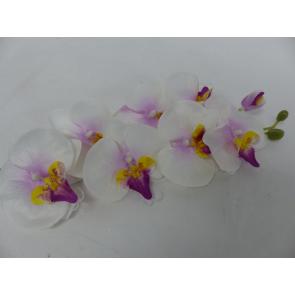 UK Orchidej růžová