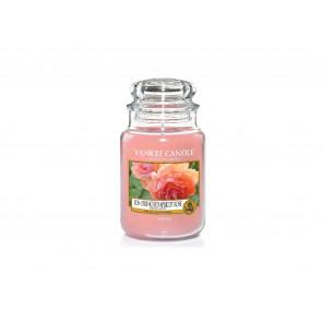 YA.sklo3/Sun-Drenched Apricot Rose ZT