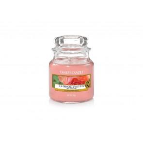 YA.sklo1/Sun-Drenched Apricot Rose ZT