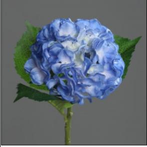 UK Hortenzie větvička modrá