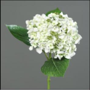 UK Hortenzie větvička bílá