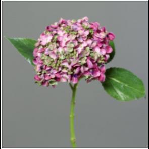 UK Hortenzie větvička růžová