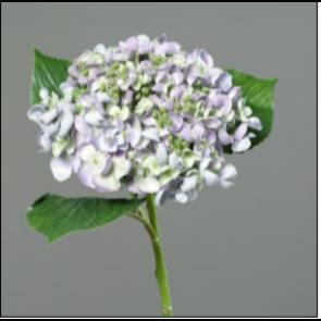 UK Hortenzie větvička levandulová