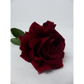 UK Růže rudá