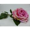 UK Růže růžová