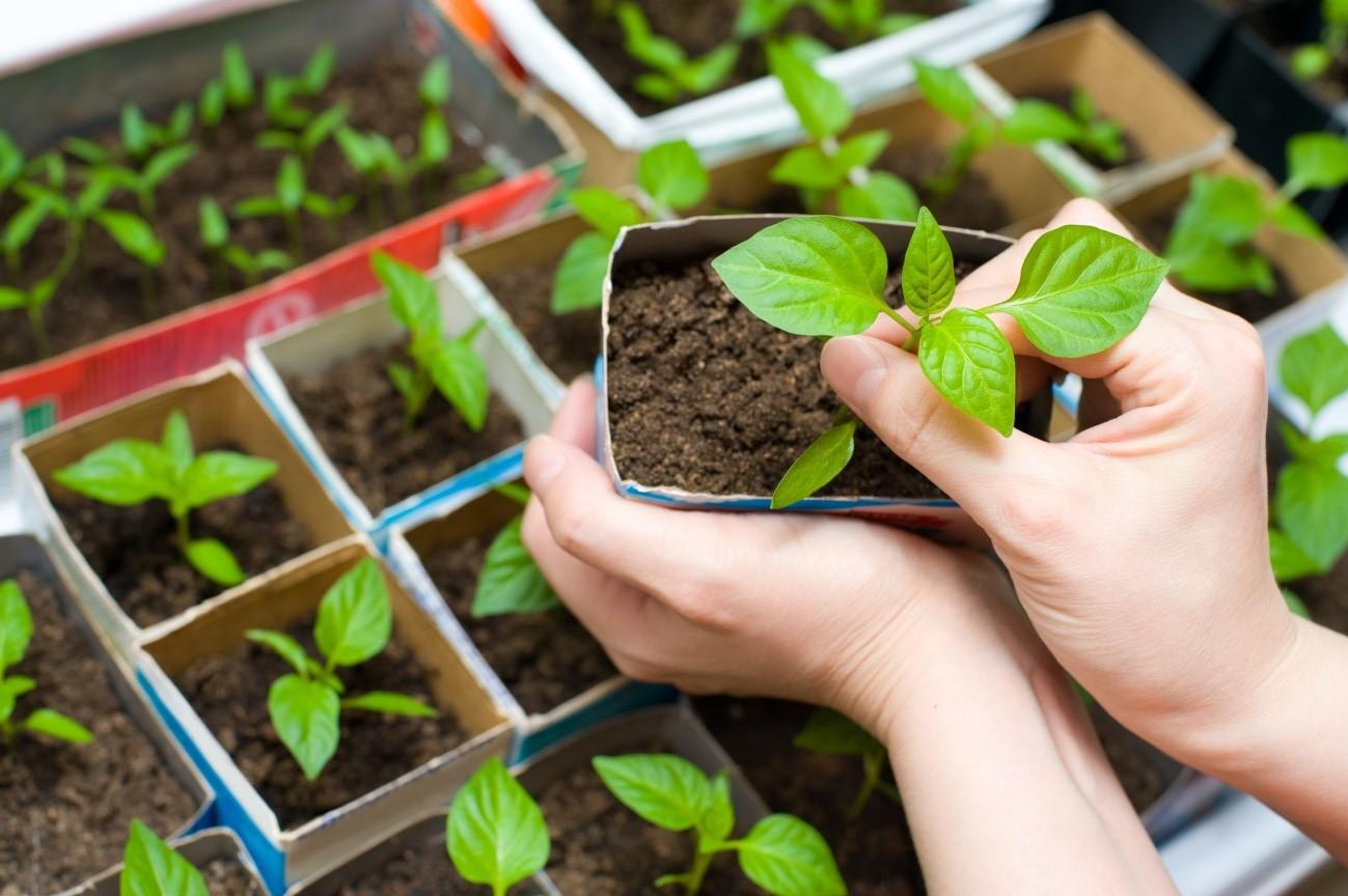 Únorový výsev květin a zeleniny
