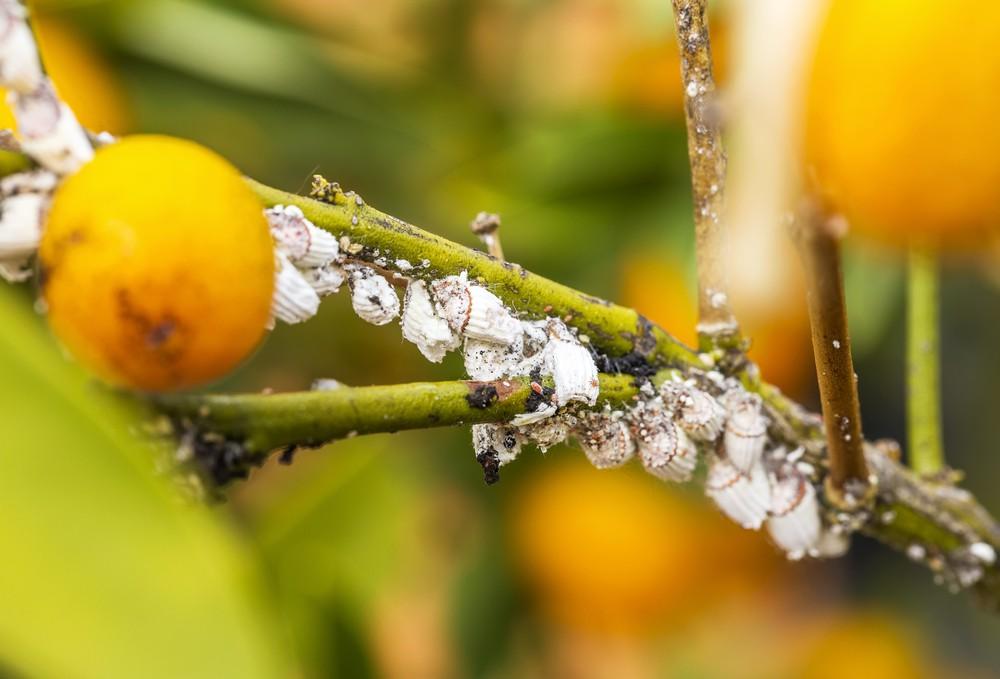 Škůdci a choroby ve skleníku
