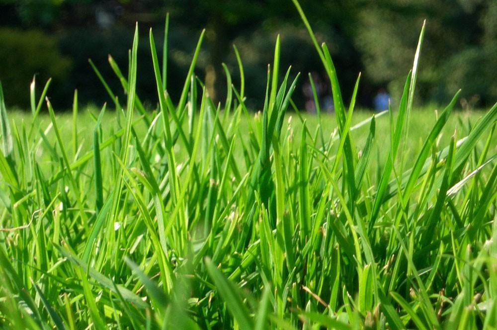 Trávníková hnojiva Agro