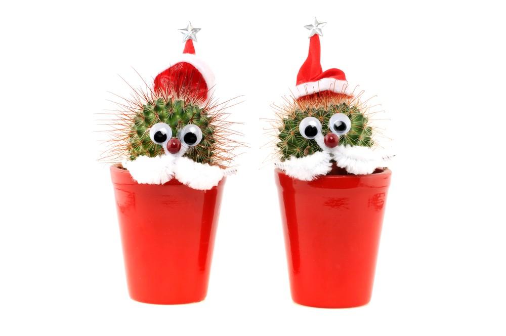 Jak se starat o Vánoční kaktus