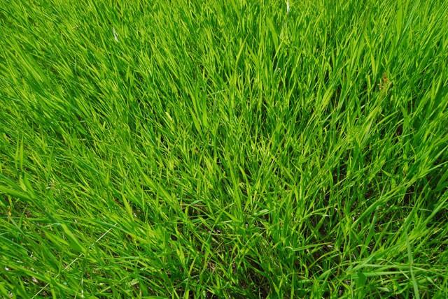 Kristalon pro trávník a zahradu