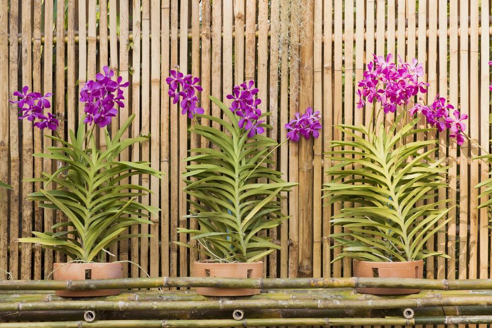 Základní rady, jak správně pečovat o orchideje?