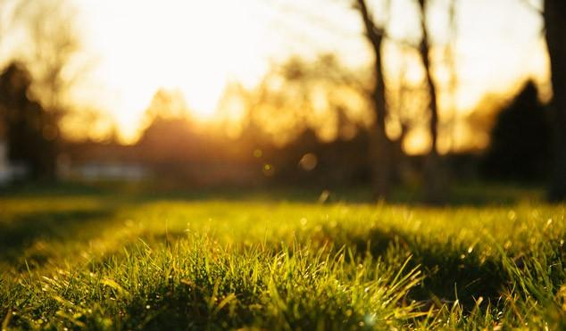 Jak připravit trávník na zimu