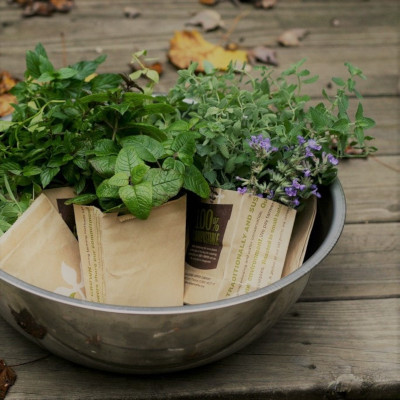 Čerstvé bylinky pro váš stůl